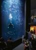 aquarium_g
